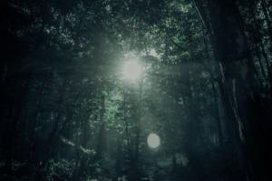 image monde jungle obscure